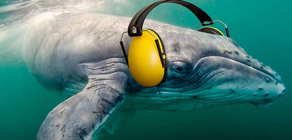 New-Silent-Oceans-Campaign-Raises-Awareness-of-Oceanic-Noise-Pollution-1000x480